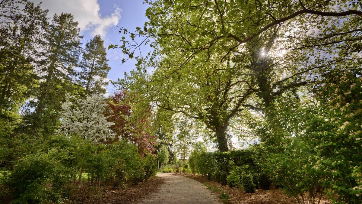Les Jardins À L Anglaise le jardin anglais   château de chambord